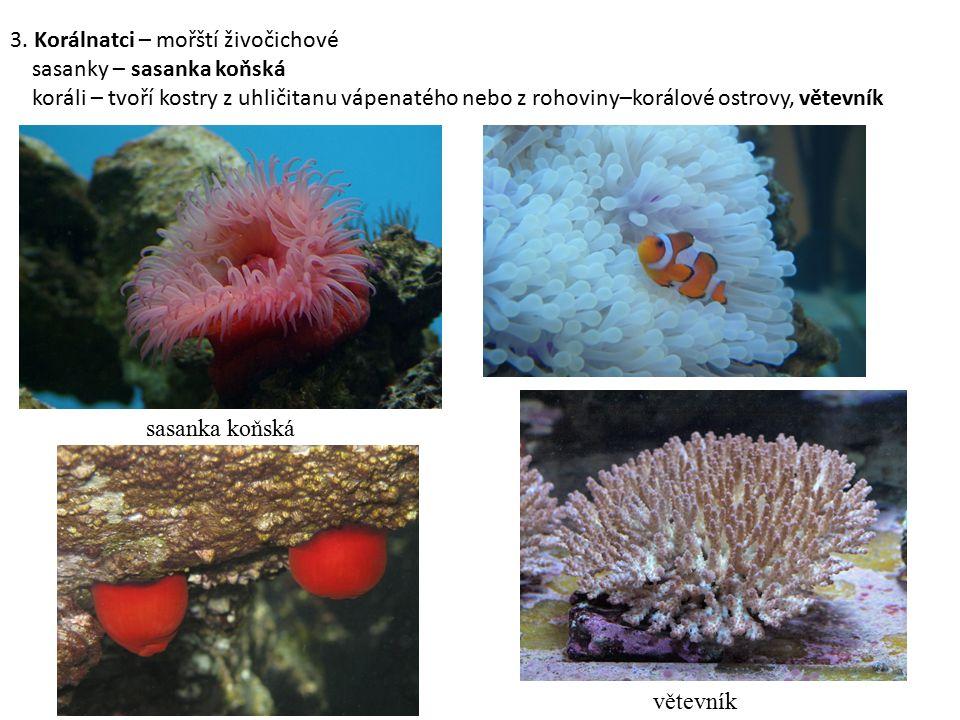 3. Korálnatci – mořští živočichové sasanky – sasanka koňská koráli – tvoří kostry z uhličitanu vápenatého nebo z rohoviny–korálové ostrovy, větevník v