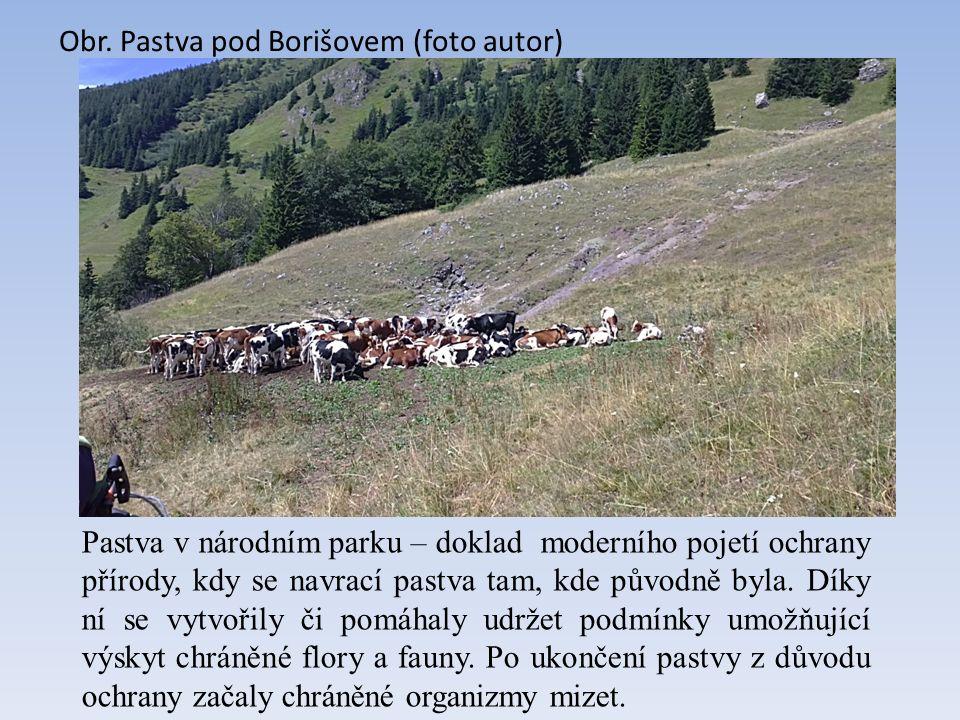 Obr. Pastva pod Borišovem (foto autor) Pastva v národním parku – doklad moderního pojetí ochrany přírody, kdy se navrací pastva tam, kde původně byla.