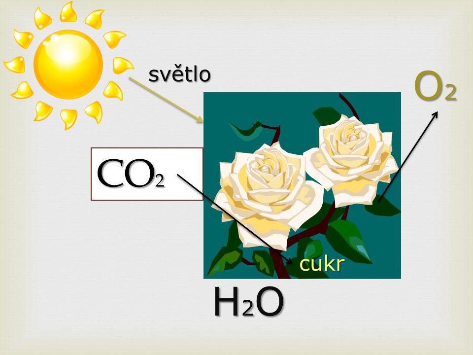 CO 2 H2OH2OH2OH2O O2O2O2O2 cukr světlo