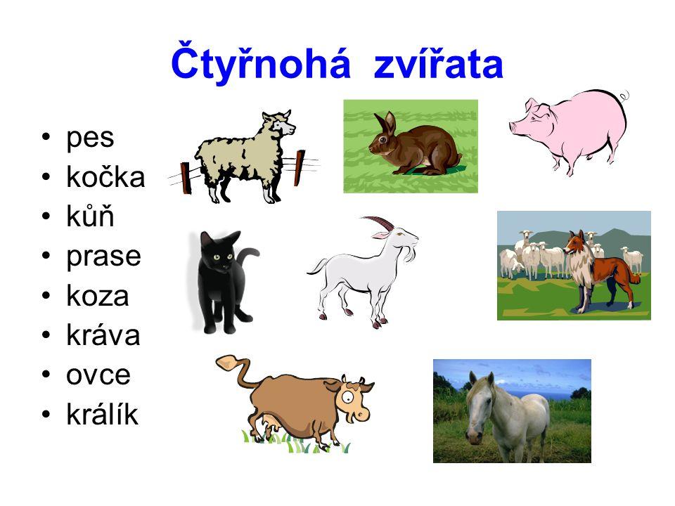 Čtyřnohá zvířata pes kočka kůň prase koza kráva ovce králík