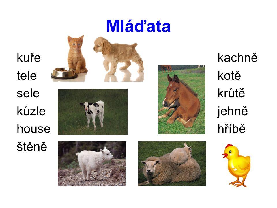 Stejnou barvou označ členy jedné rodiny husa slepice pes kocour kráva kotě jehně beran house býk štěně kohout kuře houser tele fena kočka ovce