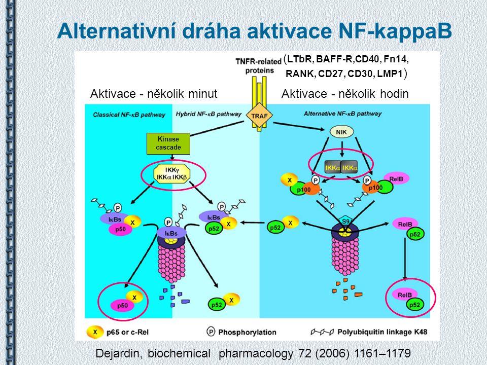 Alternativní dráha aktivace NF-kappaB Dejardin, biochemical pharmacology 72 (2006) 1161–1179 ( LTbR, BAFF-R,CD40, Fn14, RANK, CD27, CD30, LMP1 ) Kinas