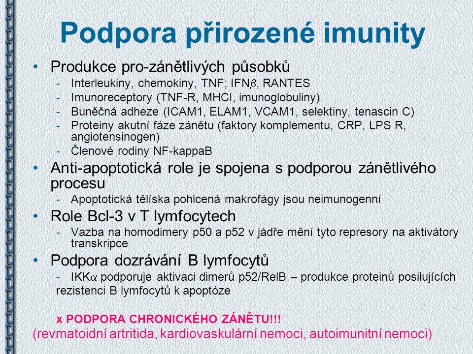 Podpora přirozené imunity Produkce pro-zánětlivých působků -Interleukiny, chemokiny, TNF; IFN , RANTES -Imunoreceptory (TNF-R, MHCI, imunoglobuliny)