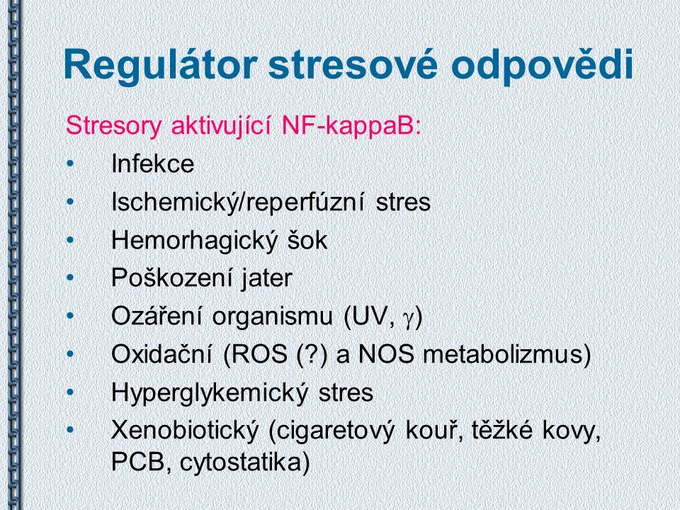 Regulátor stresové odpovědi Stresory aktivující NF-kappaB: Infekce Ischemický/reperfúzní stres Hemorhagický šok Poškození jater Ozáření organismu (UV,