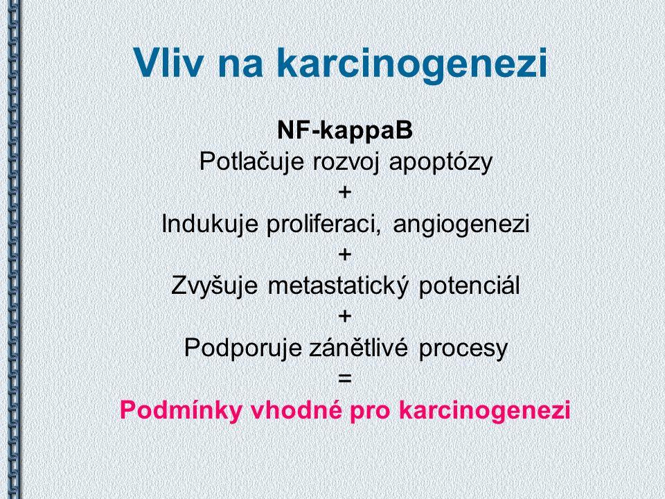 Vliv na karcinogenezi NF-kappaB Potlačuje rozvoj apoptózy + Indukuje proliferaci, angiogenezi + Zvyšuje metastatický potenciál + Podporuje zánětlivé p
