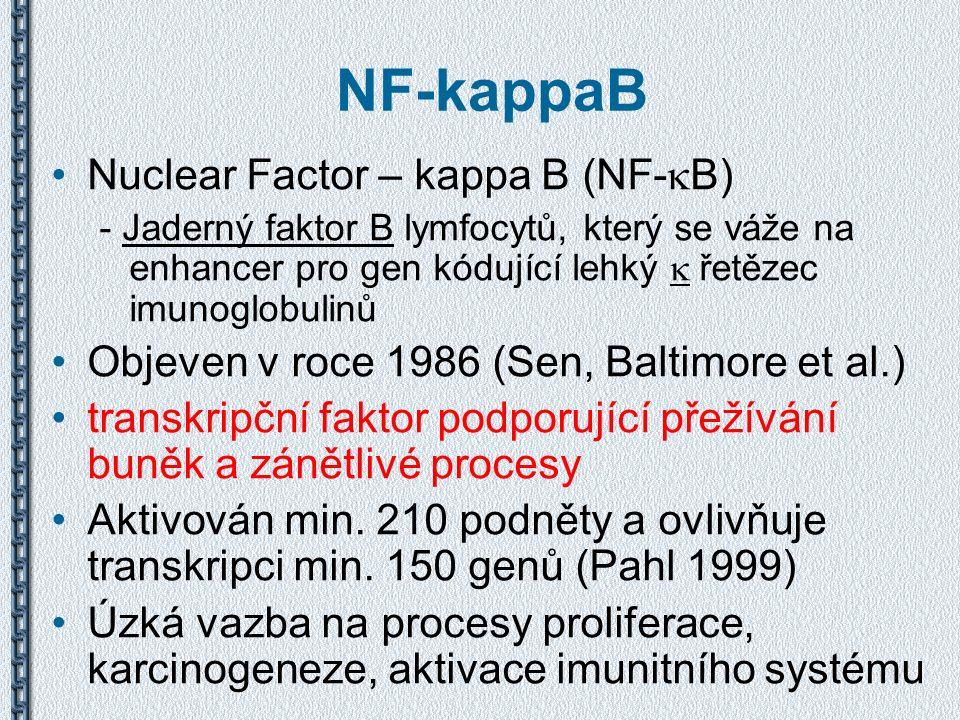 NF-kappaB Nuclear Factor – kappa B (NF-  B) - Jaderný faktor B lymfocytů, který se váže na enhancer pro gen kódující lehký  řetězec imunoglobulinů