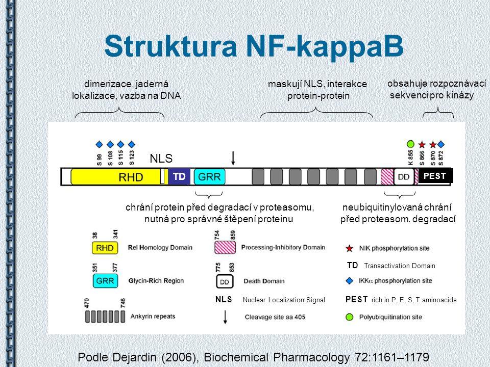 Struktura NF-kappaB Podle Dejardin (2006), Biochemical Pharmacology 72:1161–1179 dimerizace, jaderná lokalizace, vazba na DNA maskují NLS, interakce p