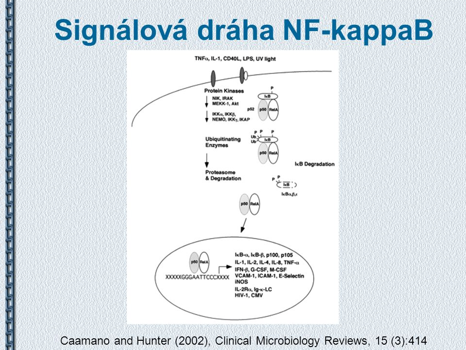 Signálová dráha NF-kappaB Caamano and Hunter (2002), Clinical Microbiology Reviews, 15 (3):414
