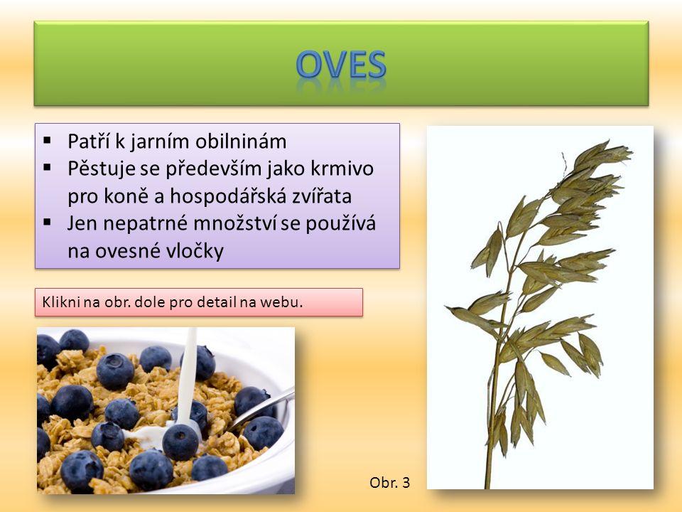  Příliš se nepěstuje  Využívá se k výrobě žitné (tzv.