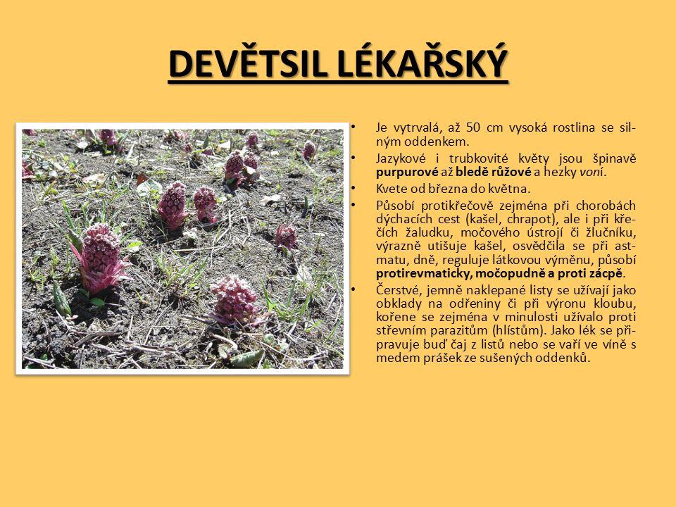 DEVĚTSIL LÉKAŘSKÝ Je vytrvalá, až 50 cm vysoká rostlina se sil- ným oddenkem.