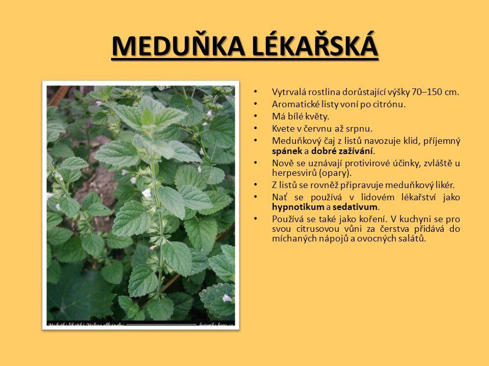MEDUŇKA LÉKAŘSKÁ Vytrvalá rostlina dorůstající výšky 70–150 cm.