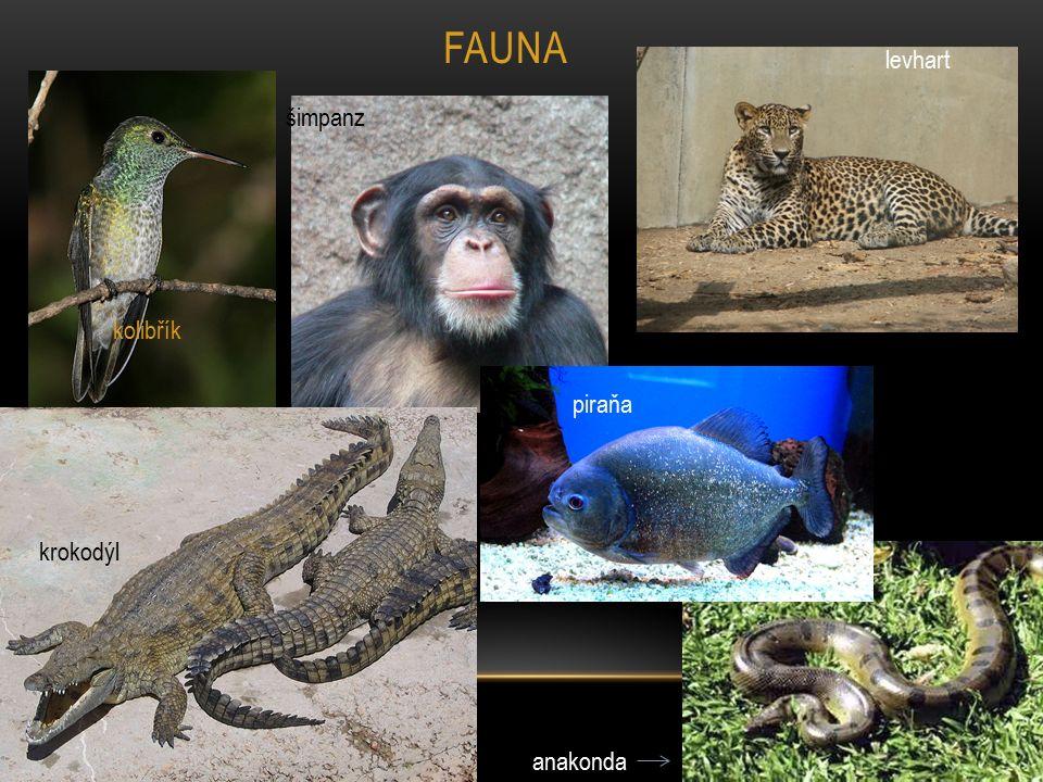 kolibřík šimpanz krokodýl anakonda levhart FAUNA piraňa