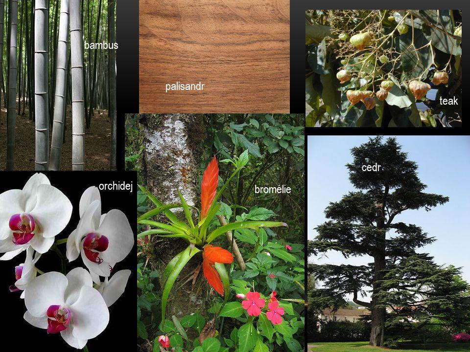 palisandr cedr orchidej bromélie teak bambus