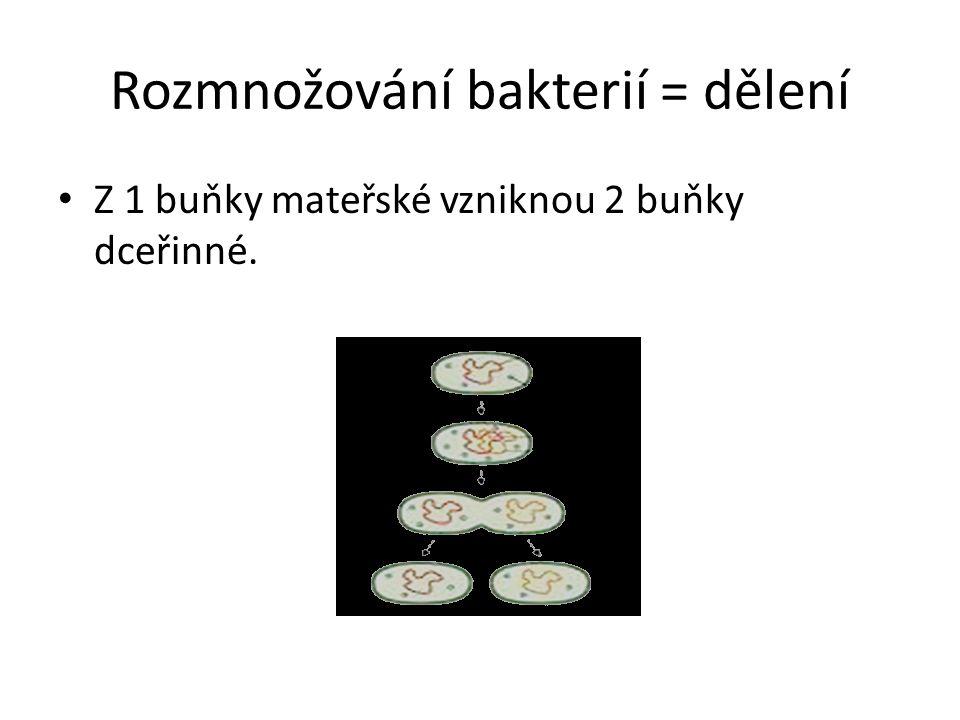 Rozmnožování bakterií = dělení Z 1 buňky mateřské vzniknou 2 buňky dceřinné.