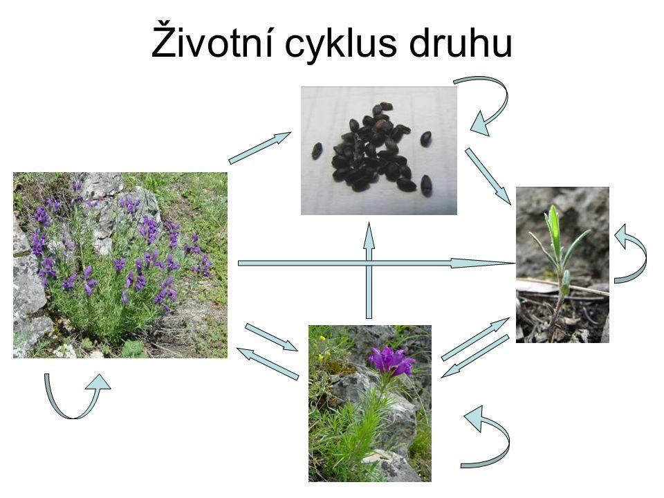 Životní cyklus druhu