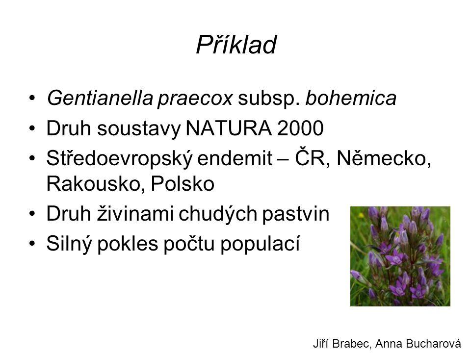 Příklad Gentianella praecox subsp.