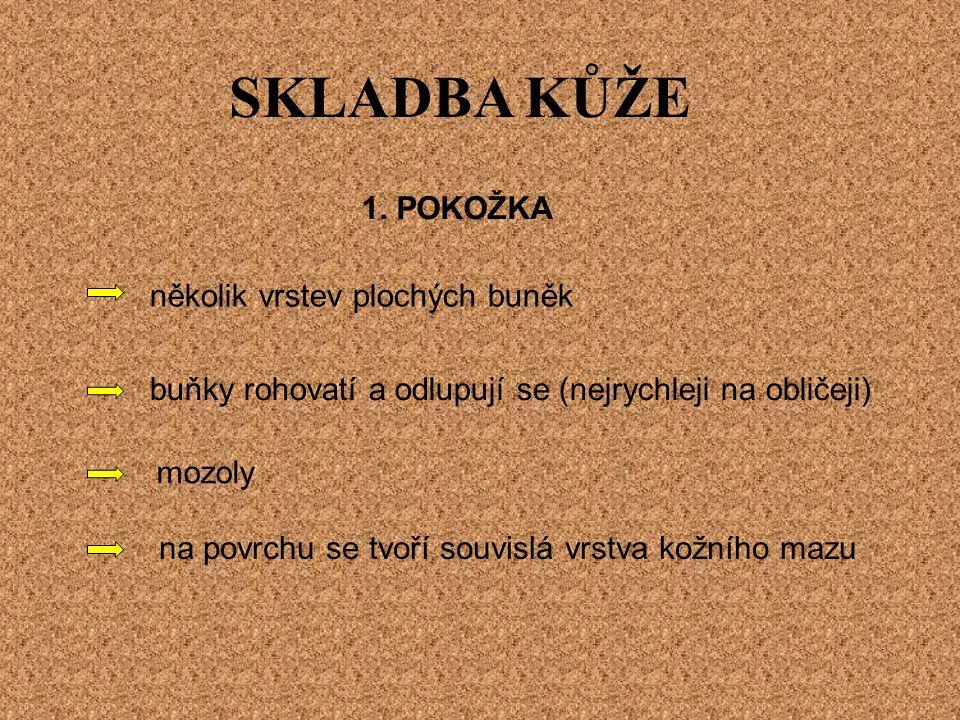 SKLADBA KŮŽE 1.
