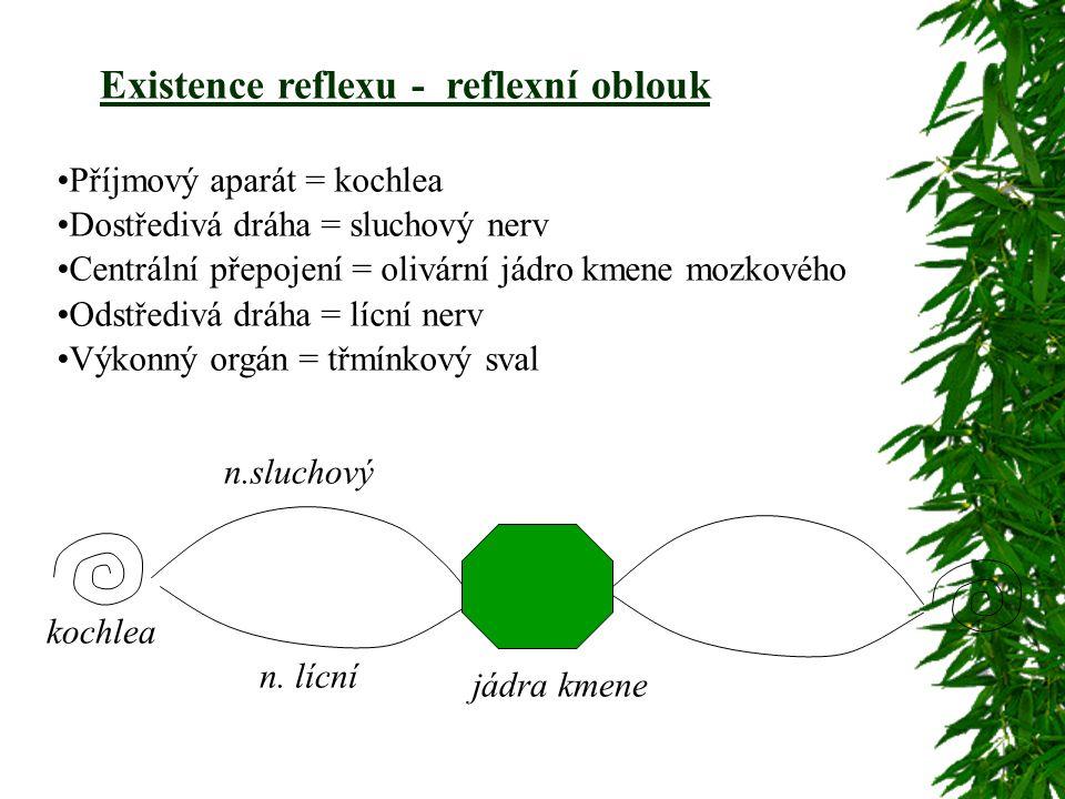 Existence reflexu - reflexní oblouk n.sluchový n.