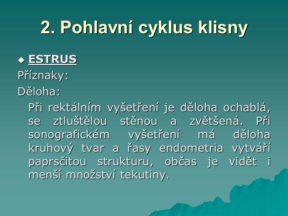 2. Pohlavní cyklus klisny  ESTRUS Příznaky:Děloha: Při rektálním vyšetření je děloha ochablá, se ztluštělou stěnou a zvětšená. Při sonografickém vyše
