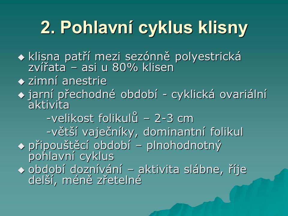 2. Pohlavní cyklus klisny  klisna patří mezi sezónně polyestrická zvířata – asi u 80% klisen  zimní anestrie  jarní přechodné období - cyklická ova