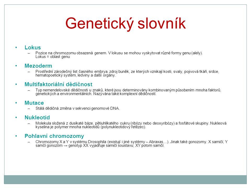 Genetický slovník Lokus –Pozice na chromozomu obsazená genem. V lokusu se mohou vyskytovat různé formy genu (alely). Lokus = oblast genu Mezoderm –Pro