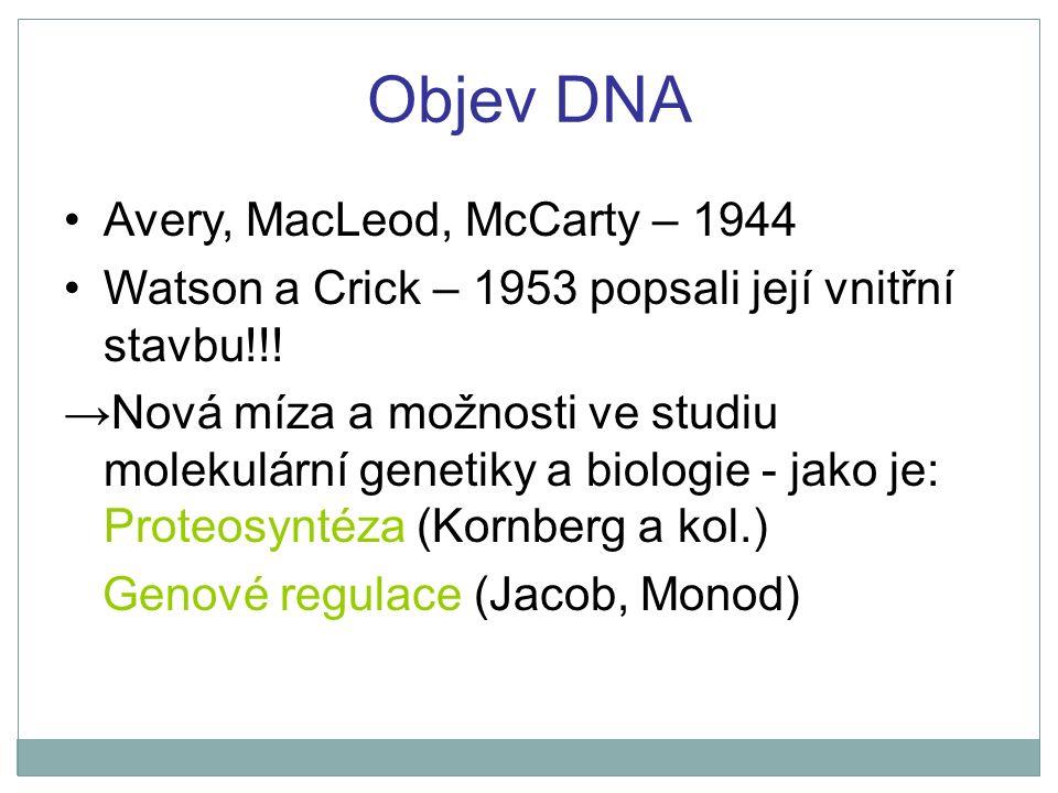 Objev DNA Avery, MacLeod, McCarty – 1944 Watson a Crick – 1953 popsali její vnitřní stavbu!!! →Nová míza a možnosti ve studiu molekulární genetiky a b