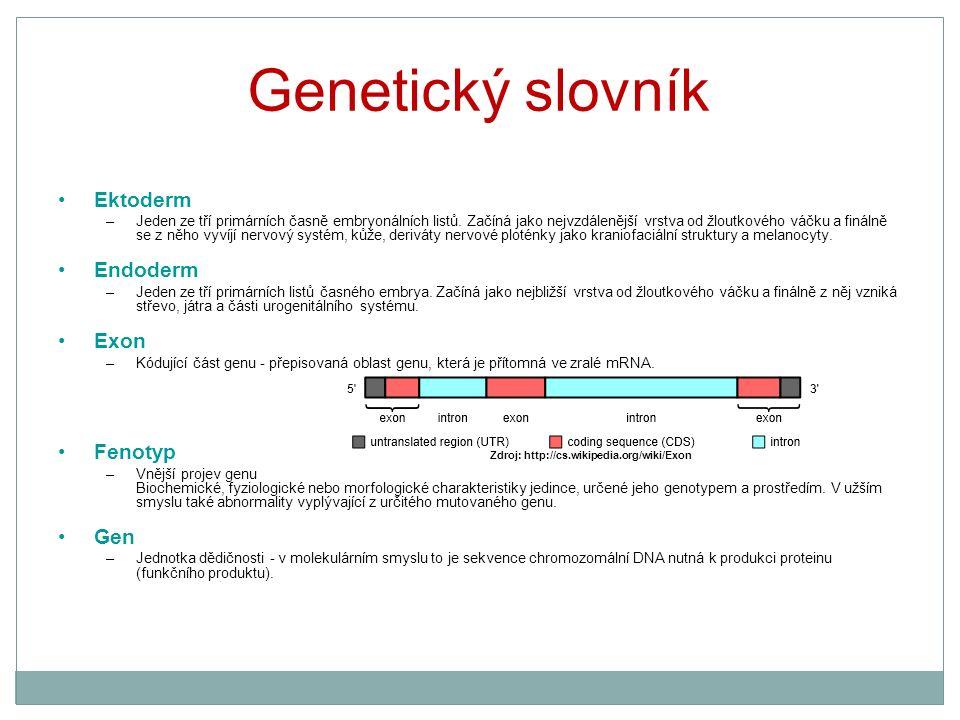 Genetický slovník Ektoderm –Jeden ze tří primárních časně embryonálních listů. Začíná jako nejvzdálenější vrstva od žloutkového váčku a finálně se z n