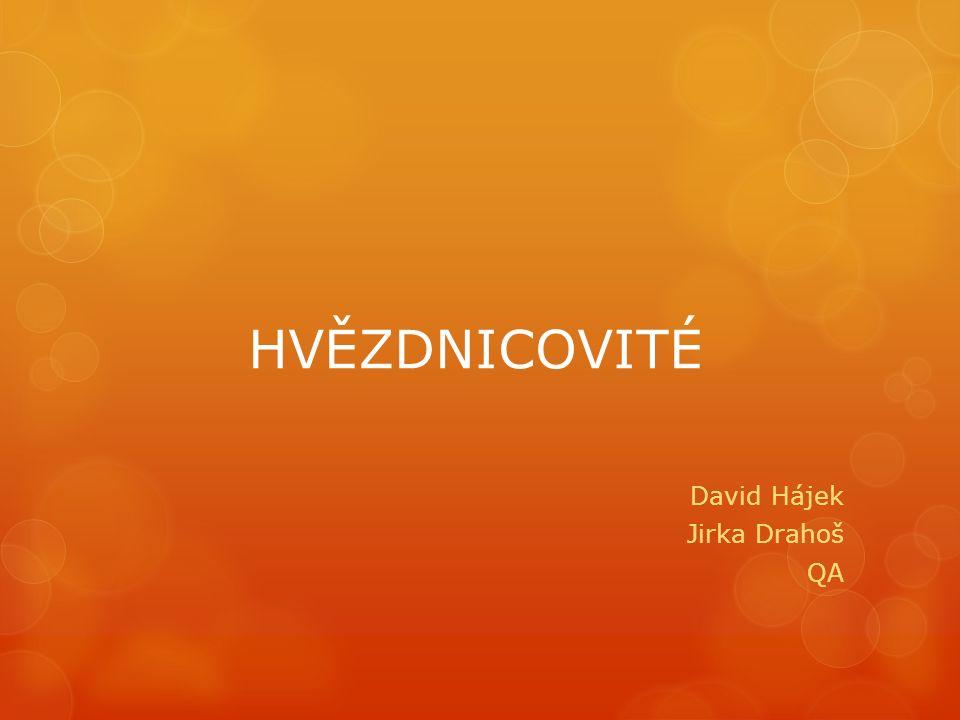 HVĚZDNICOVITÉ David Hájek Jirka Drahoš QA