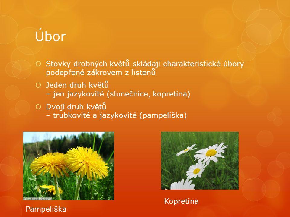 Úbor  Stovky drobných květů skládají charakteristické úbory podepřené zákrovem z listenů  Jeden druh květů – jen jazykovité (slunečnice, kopretina)  Dvojí druh květů – trubkovité a jazykovité (pampeliška) Pampeliška Kopretina