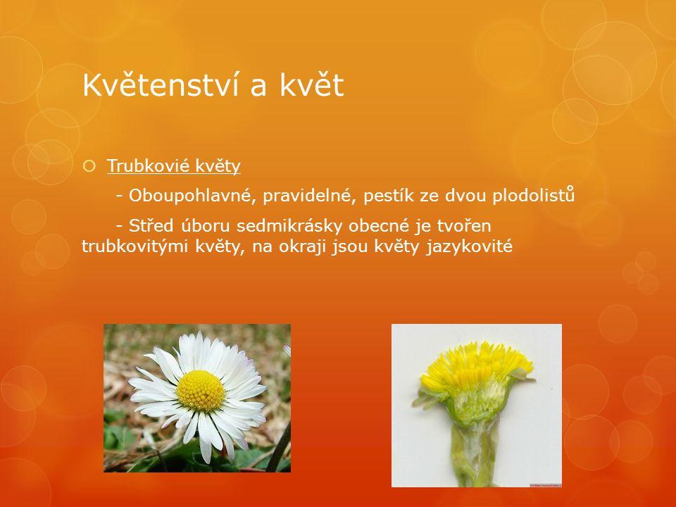 Květenství a květ  Trubkovié květy - Oboupohlavné, pravidelné, pestík ze dvou plodolistů - Střed úboru sedmikrásky obecné je tvořen trubkovitými květy, na okraji jsou květy jazykovité