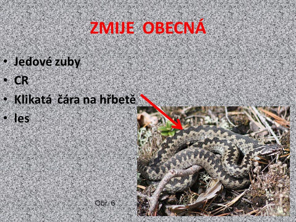 ZMIJE OBECNÁ Jedové zuby CR Klikatá čára na hřbetě les Obr. 6