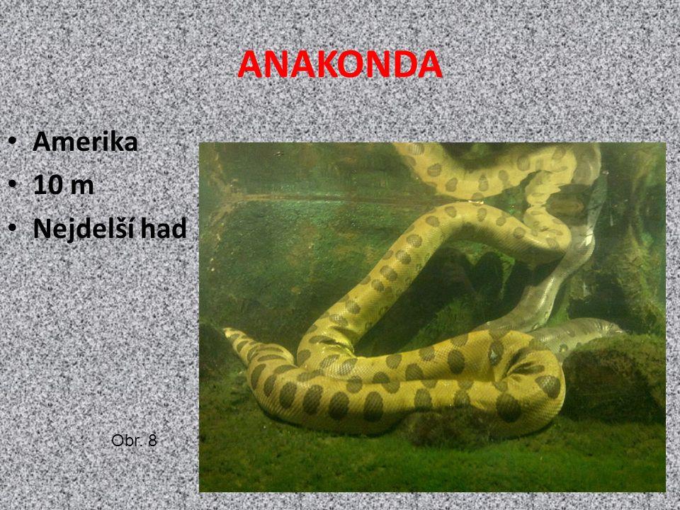 ANAKONDA Amerika 10 m Nejdelší had Obr. 8