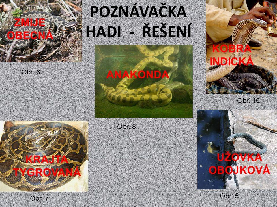 POZNÁVAČKA HADI - ŘEŠENÍ Obr. 10 Obr. 5 Obr. 8 Obr.