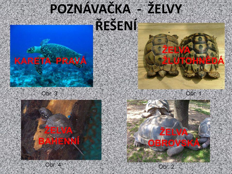 POZNÁVAČKA - ŽELVY ŘEŠENÍ Obr. 1 Obr. 2 Obr. 3 Obr.