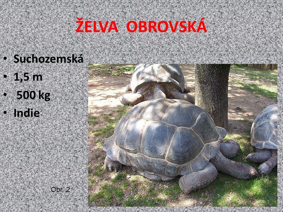 ŽELVA OBROVSKÁ Suchozemská 1,5 m 500 kg Indie Obr. 2