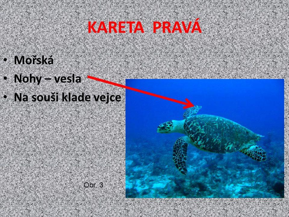KARETA PRAVÁ Mořská Nohy – vesla Na souši klade vejce Obr. 3