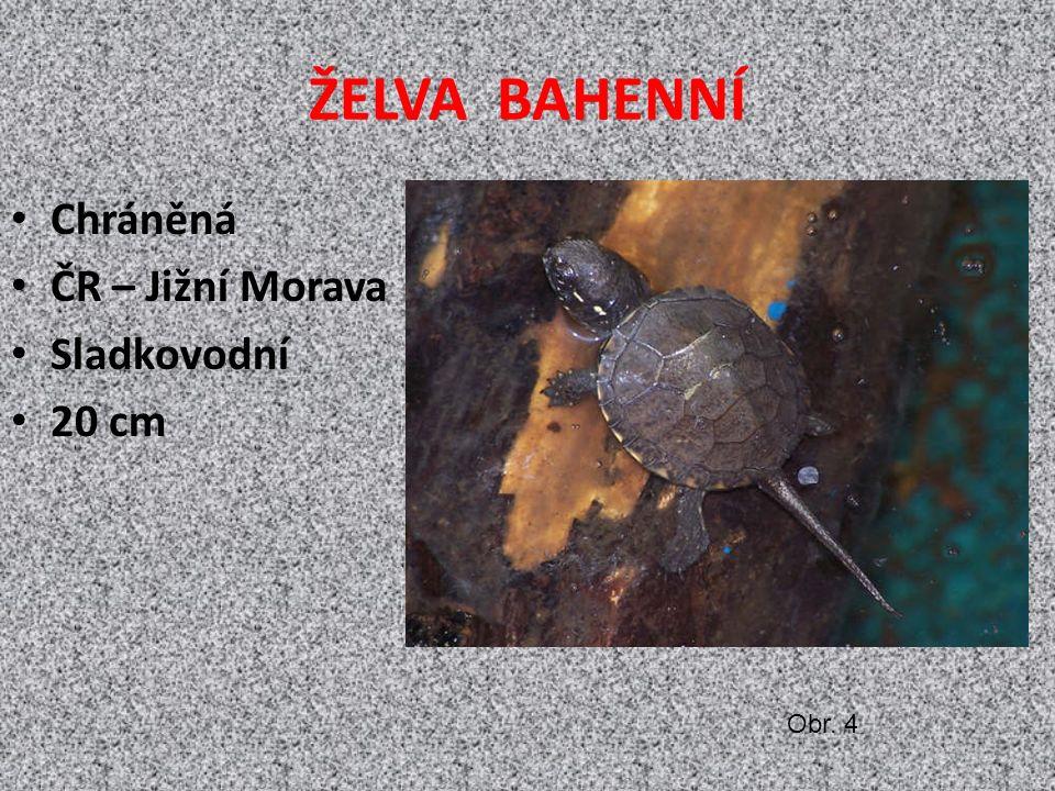 ŽELVA BAHENNÍ Chráněná ČR – Jižní Morava Sladkovodní 20 cm Obr. 4