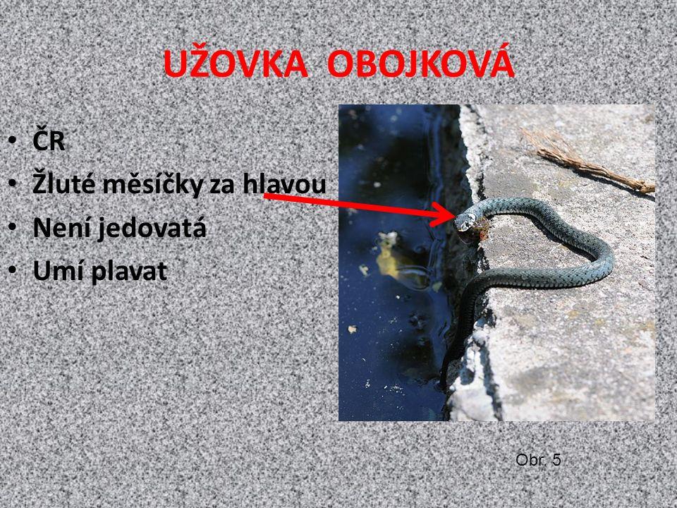 UŽOVKA OBOJKOVÁ ČR Žluté měsíčky za hlavou Není jedovatá Umí plavat Obr. 5