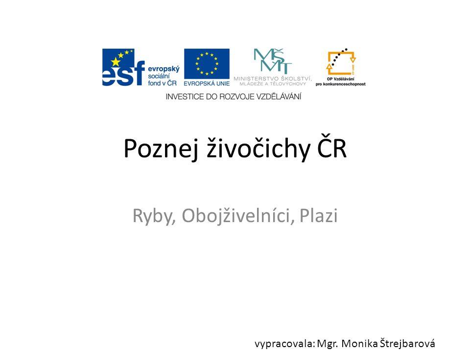 Poznej živočichy ČR Ryby, Obojživelníci, Plazi vypracovala: Mgr. Monika Štrejbarová
