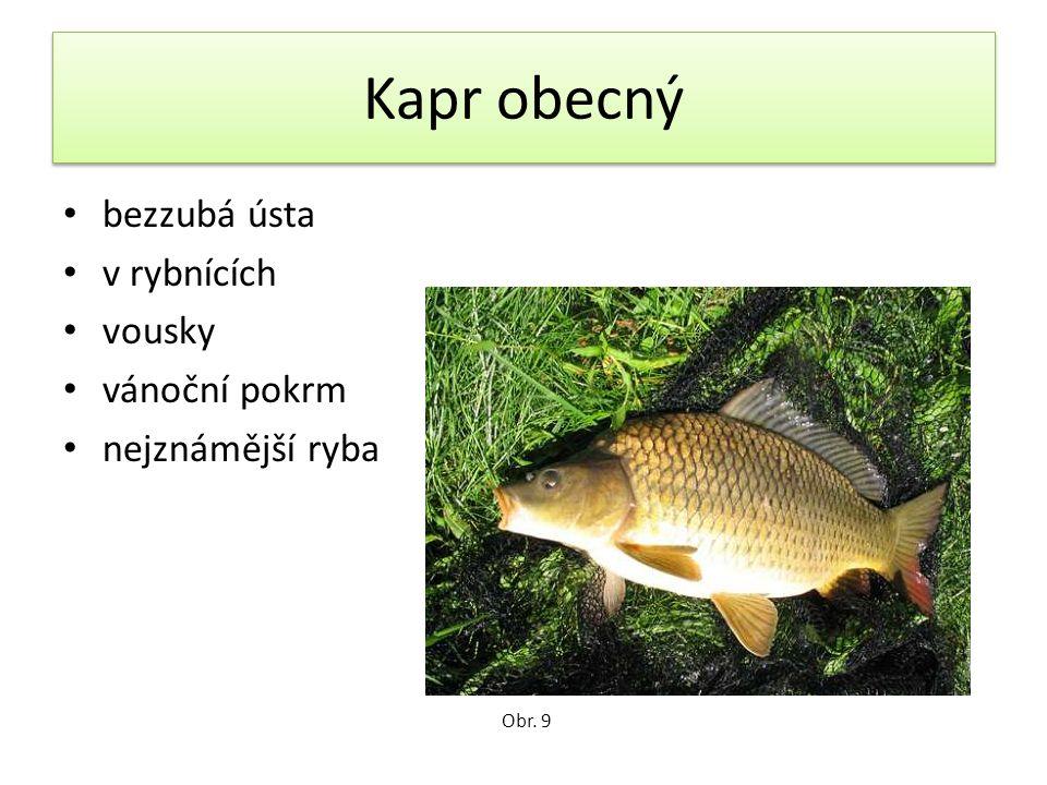 Kapr obecný bezzubá ústa v rybnících vousky vánoční pokrm nejznámější ryba Obr. 9