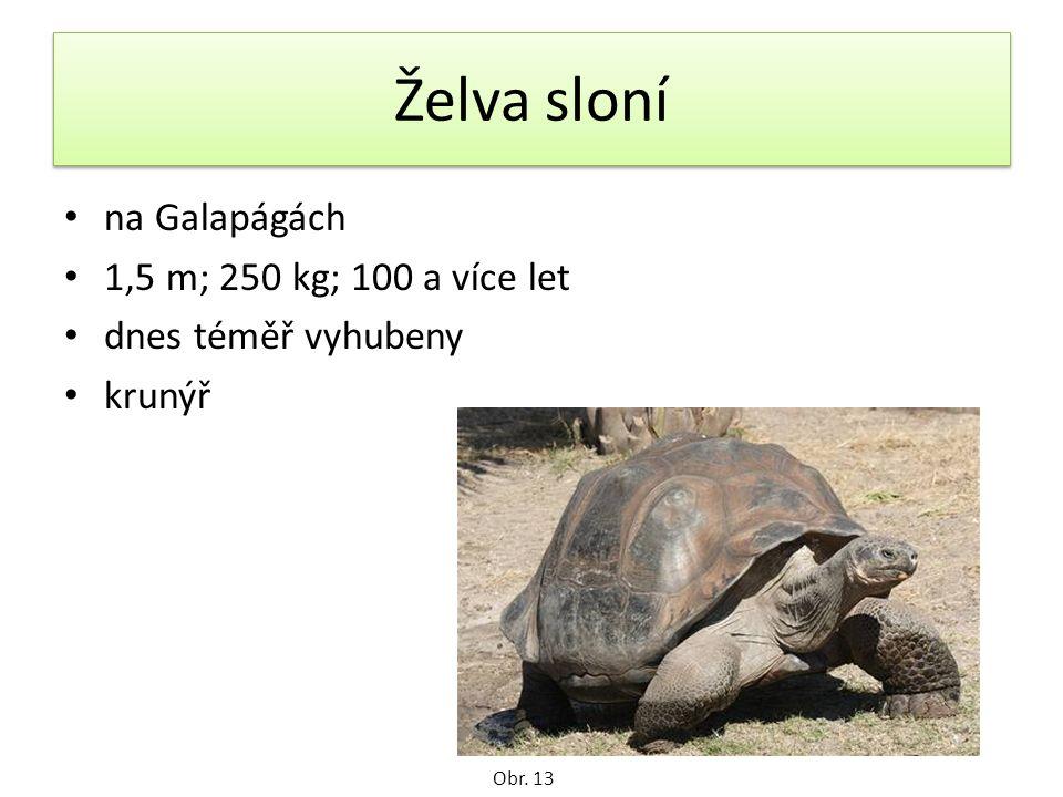 Želva sloní na Galapágách 1,5 m; 250 kg; 100 a více let dnes téměř vyhubeny krunýř Obr. 13