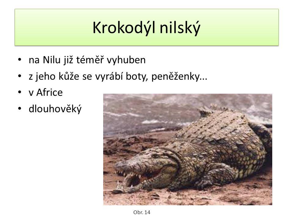 Krokodýl nilský na Nilu již téměř vyhuben z jeho kůže se vyrábí boty, peněženky...