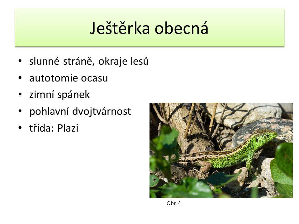 Ropucha obecná bradavičnatá kůže jedové žlázy za očima vajíčka v dlouhých šňůrách nejčastější bezocasý obojživelník Obr.