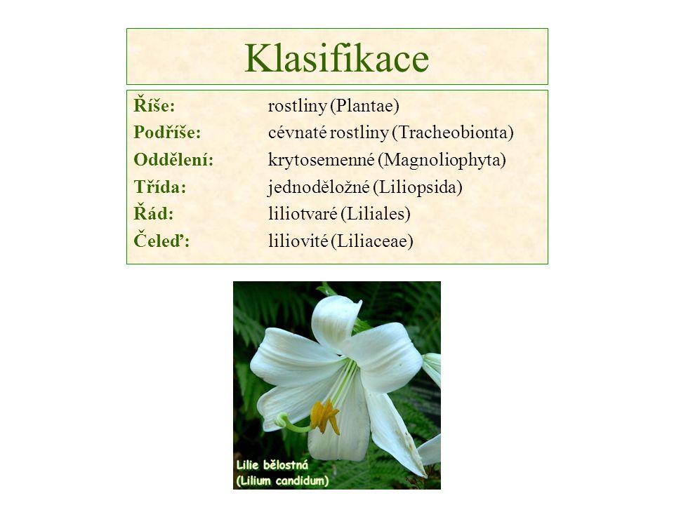 Klasifikace Říše:rostliny (Plantae) Podříše: cévnaté rostliny (Tracheobionta) Oddělení: krytosemenné (Magnoliophyta) Třída: jednoděložné (Liliopsida) Řád: liliotvaré (Liliales) Čeleď:liliovité (Liliaceae)