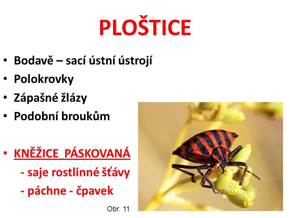 PLOŠTICE Bodavě – sací ústní ústrojí Polokrovky Zápašné žlázy Podobní broukům KNĚŽICE PÁSKOVANÁ - saje rostlinné šťávy - páchne - čpavek Obr.