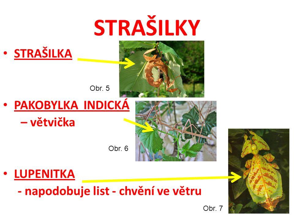 STRAŠILKY STRAŠILKA PAKOBYLKA INDICKÁ – větvička LUPENITKA - napodobuje list - chvění ve větru Obr. 5 Obr. 6 Obr. 7