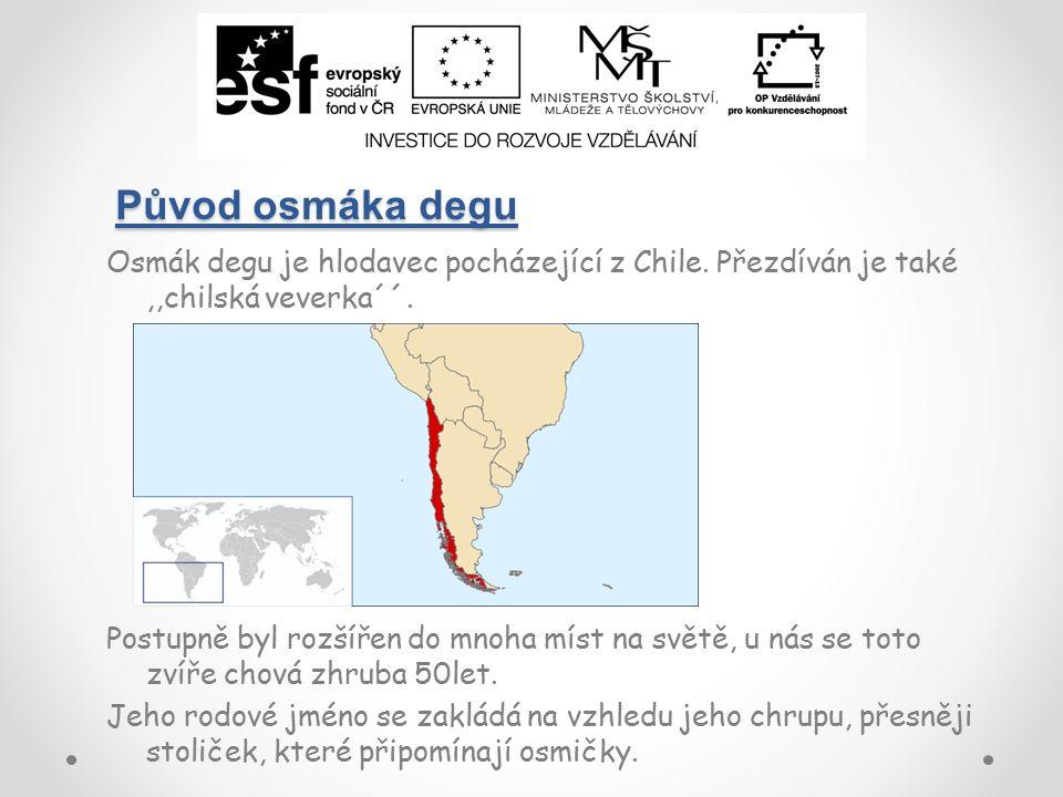 Původ osmáka degu Osmák degu je hlodavec pocházející z Chile.
