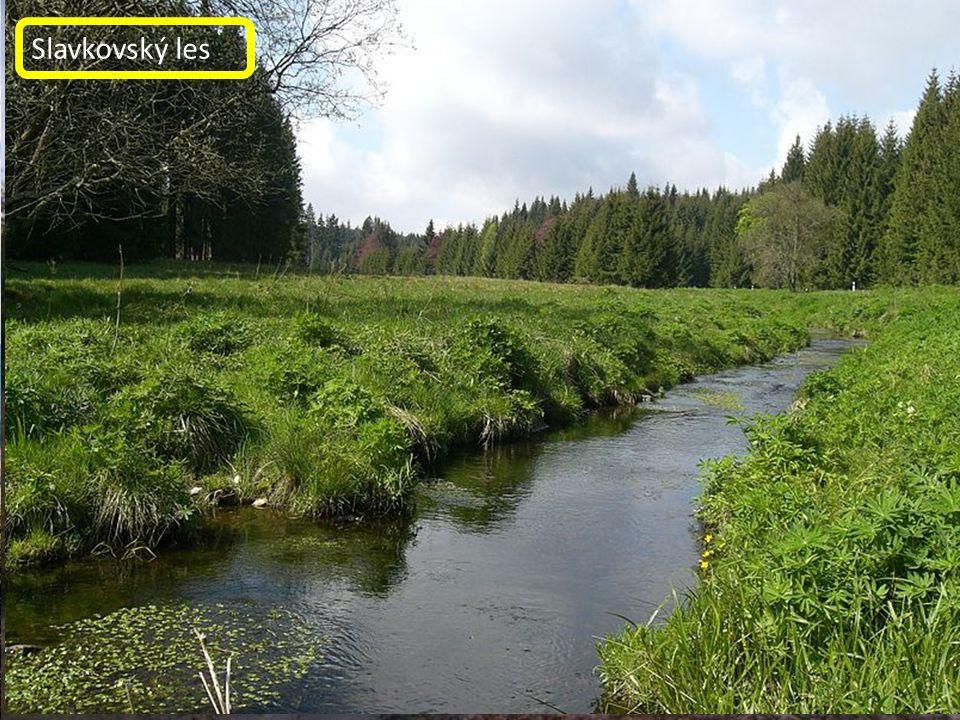 Doupovské hory Klínovec SOOS Slavkovský les