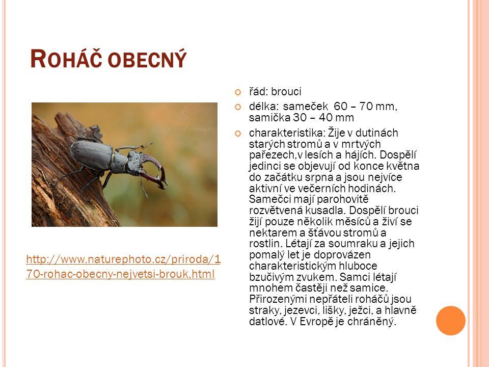 R OHÁČ OBECNÝ řád: brouci délka:sameček 60 – 70 mm, samička 30 – 40 mm charakteristika: Žije v dutinách starých stromů a v mrtvých pařezech,v lesích a hájích.