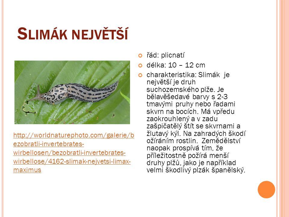 S LIMÁK NEJVĚTŠÍ řád: plicnatí délka: 10 – 12 cm charakteristika: Slimák je největší je druh suchozemského plže.